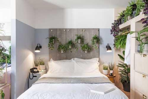 Cây trong phòng ngủ nên trồng bằng nước - thủy canh